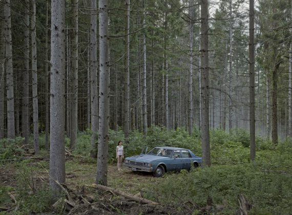 crewd-2014the-pine-forest